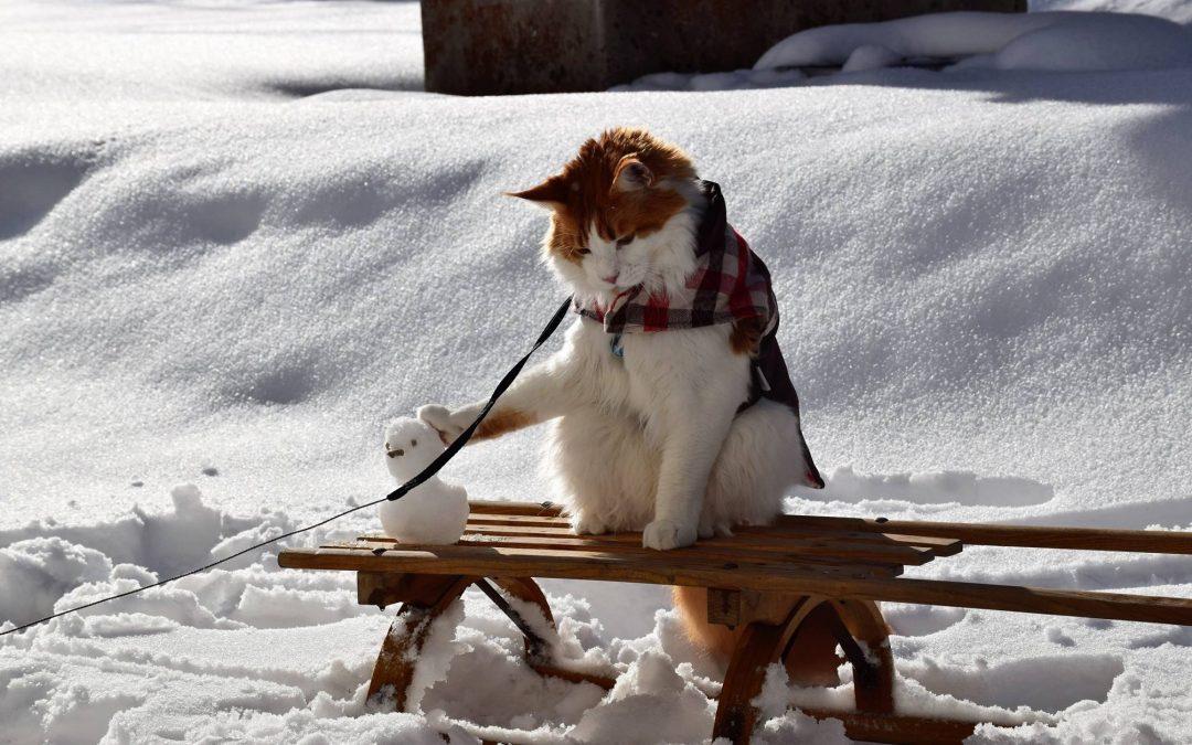 Živali v hladnih dneh